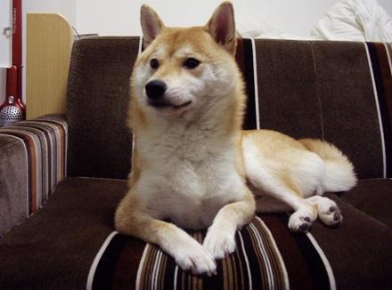 柴犬ブログ ズン画像 三角形~