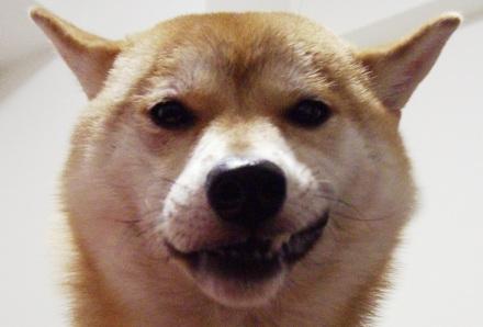 柴犬ブログランキング参戦中 1106のズンは何位かな?