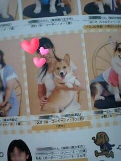 dog fan1
