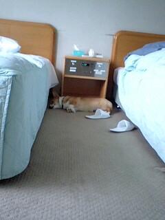 はじめての寝顔2