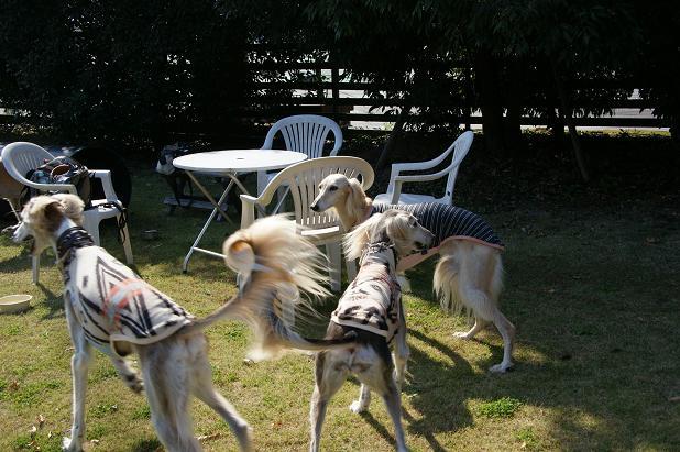 犬に引かれて善光寺2