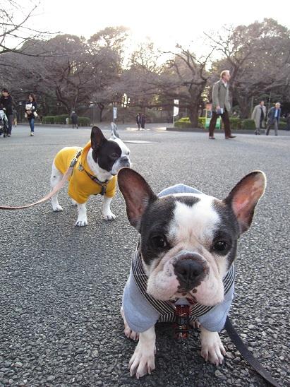 上野公園ー1