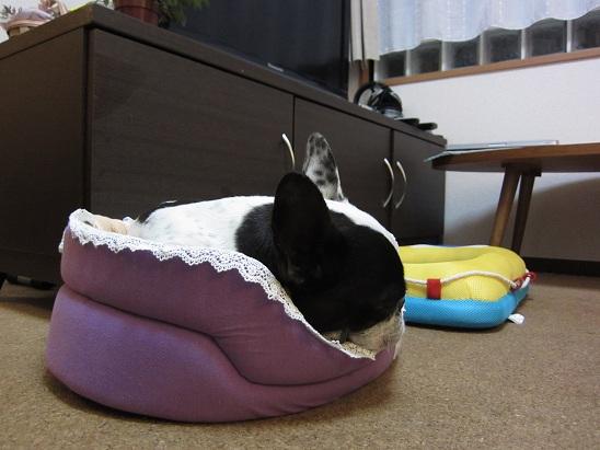 Fus bed-2