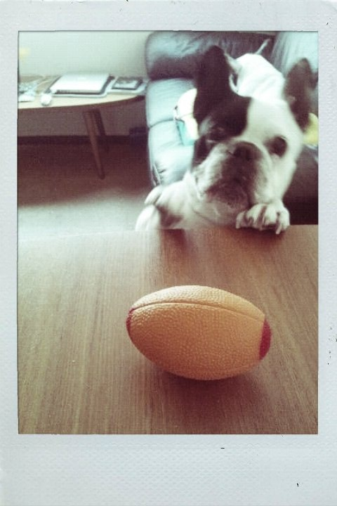 crazy about ball