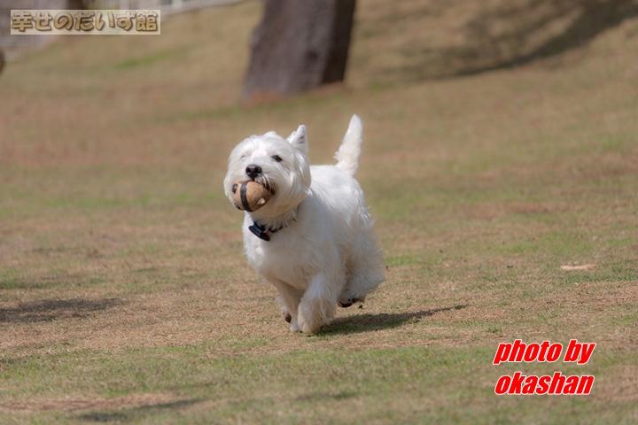 daizukanIMG_0045-1.jpg