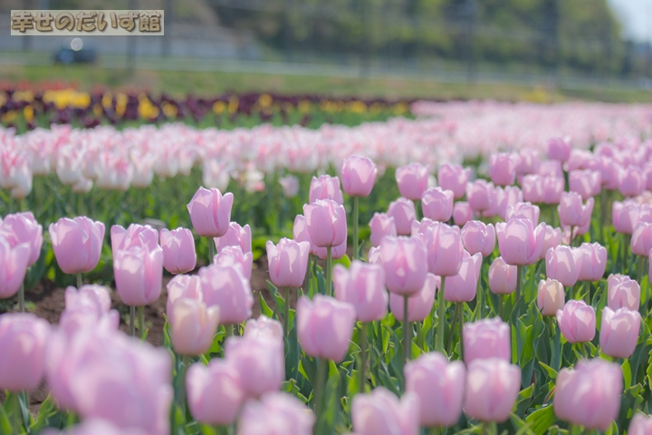 daizukanIMG_0107-1.jpg