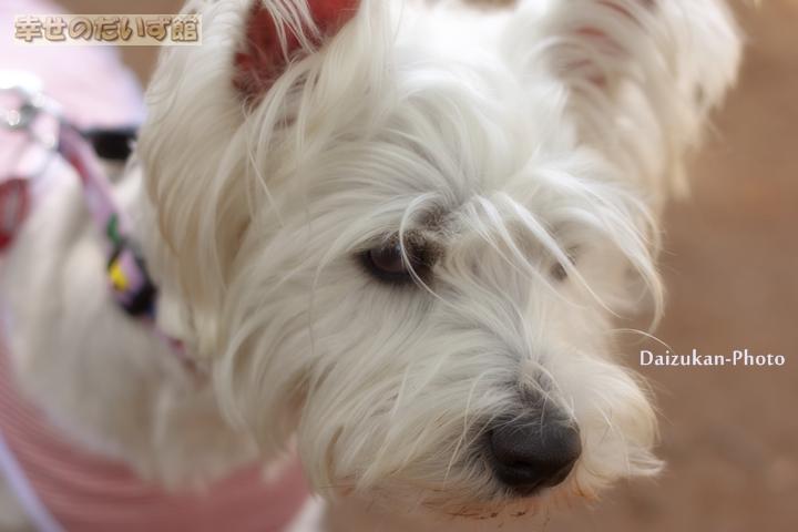 daizukanIMG_0113.jpg