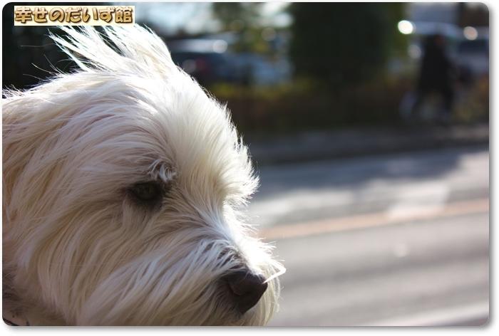 daizukanIMG_0171.jpg