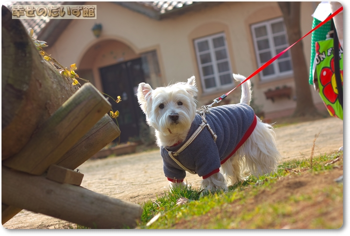 daizukanIMG_0174.jpg