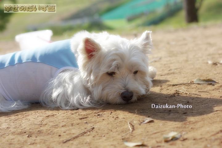 daizukanIMG_0199.jpg