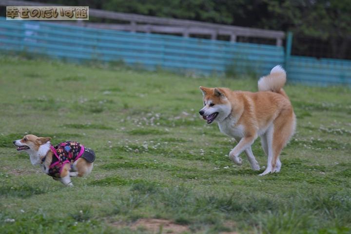 daizukanIMG_0245_20110518005123.jpg