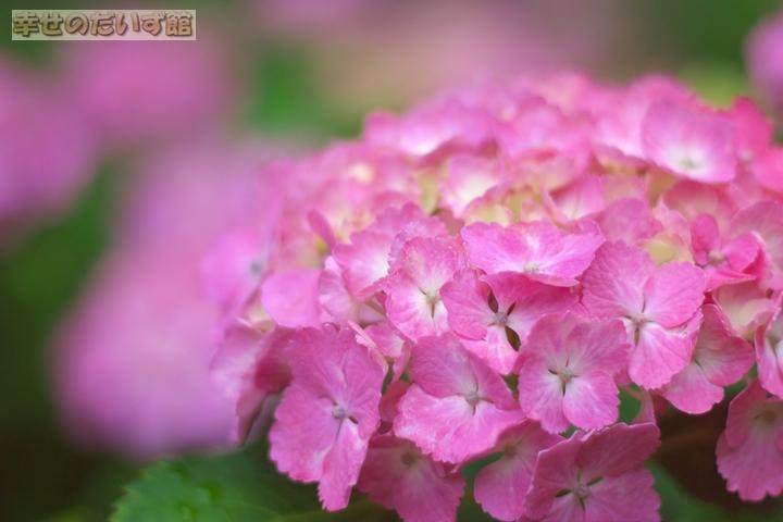 daizukanIMG_0364.jpg