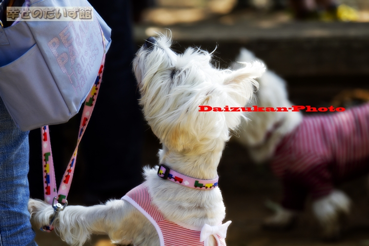 daizukanIMG_0425.jpg