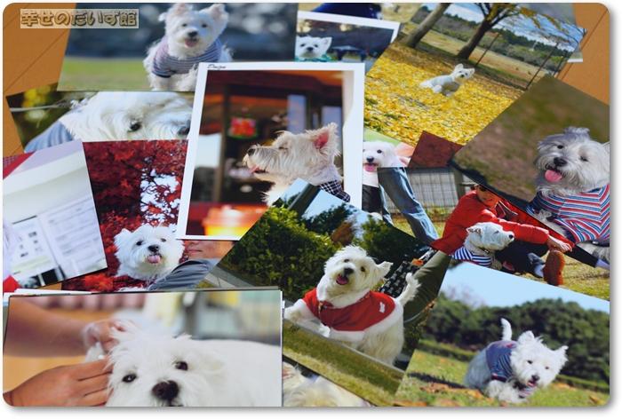 daizukanIMG_4553daizukan.jpg