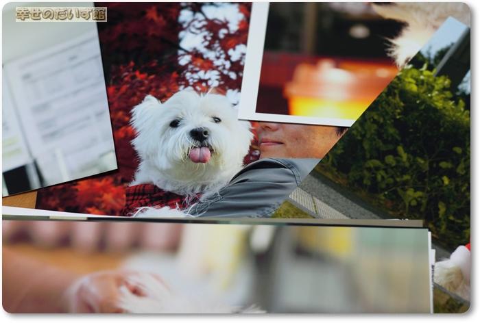 daizukanIMG_4555daizukan.jpg