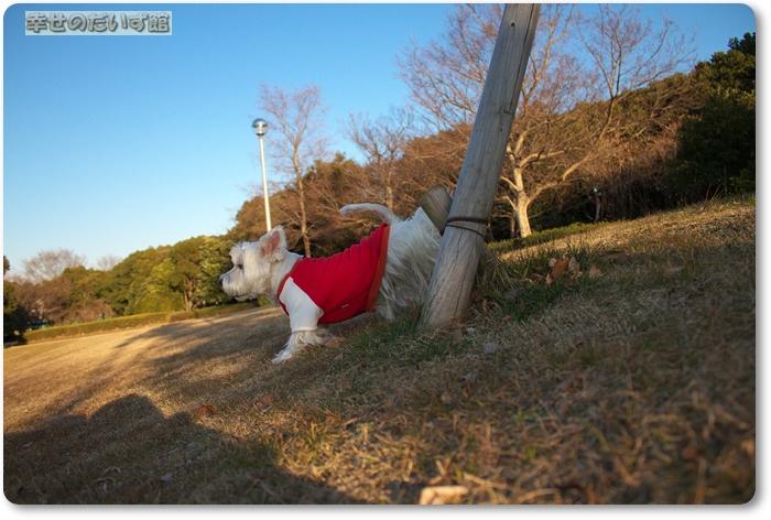 daizukanIMG_4730.jpg