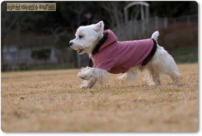 daizukanIMG_5304.jpg