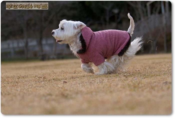 daizukanIMG_5305.jpg