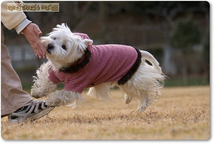 daizukanIMG_5336.jpg