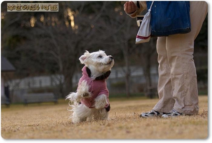 daizukanIMG_5343.jpg