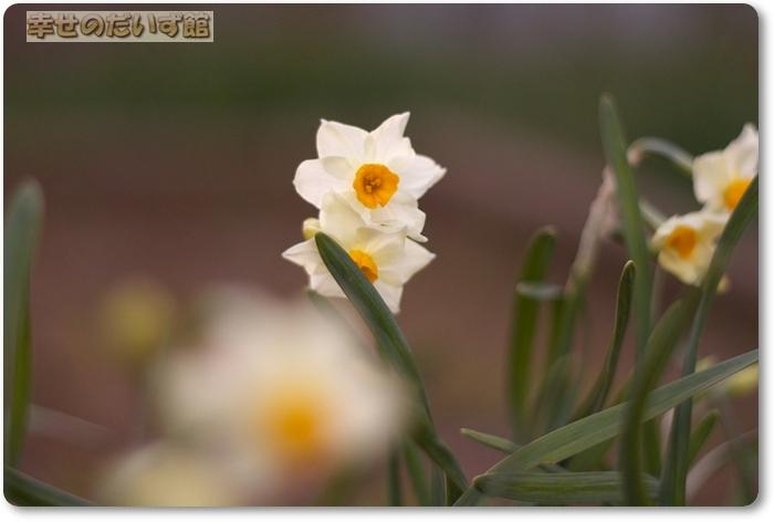 daizukanIMG_5403.jpg