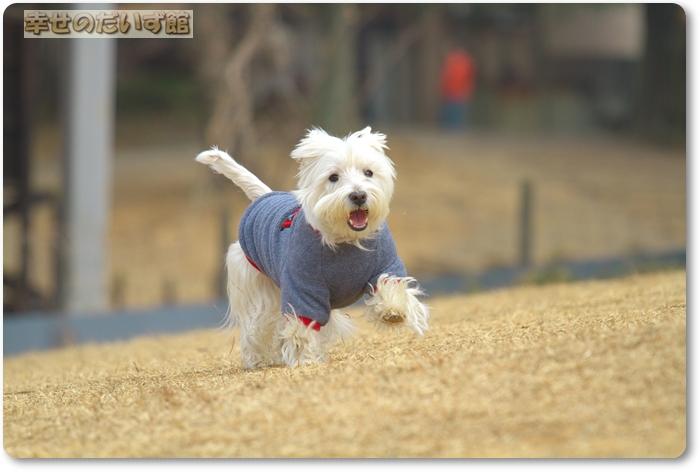 daizukanIMG_5687.jpg