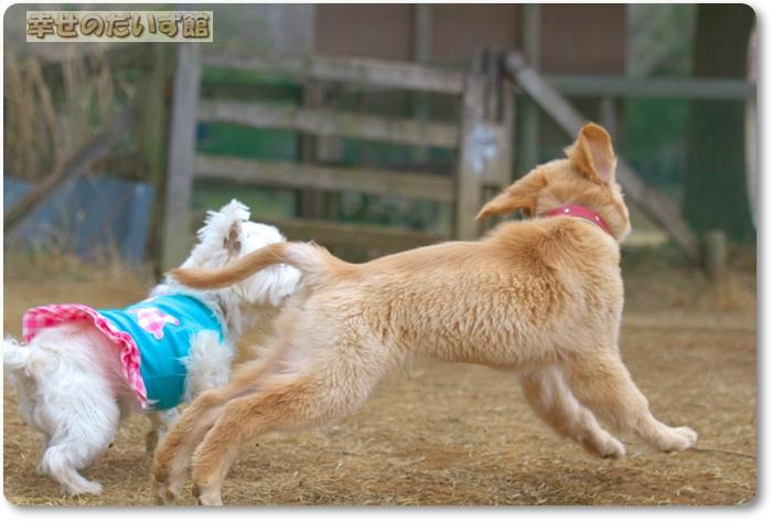 daizukanIMG_5740.jpg