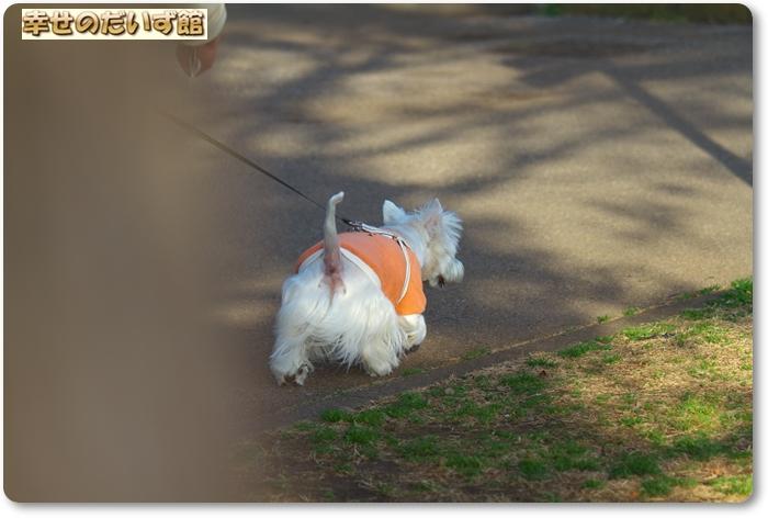 daizukanIMG_6193.jpg