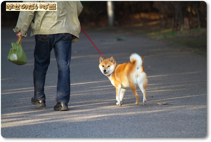 daizukanIMG_6196.jpg