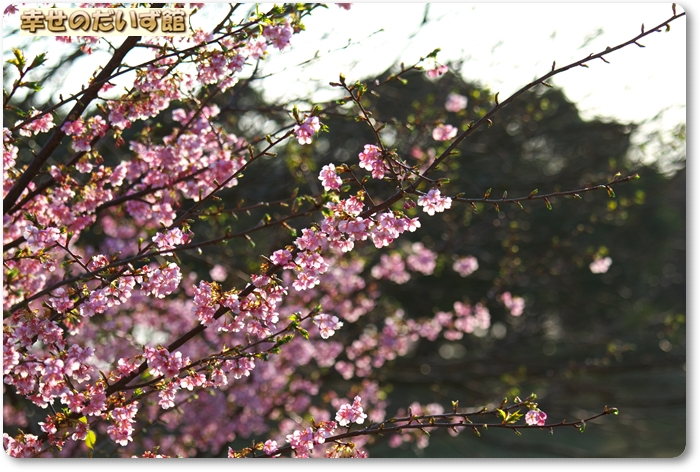 daizukanIMG_6251.jpg