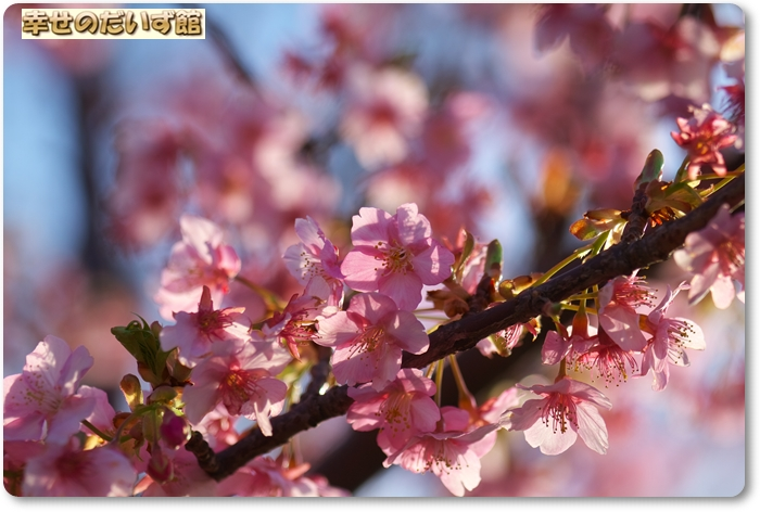 daizukanIMG_6255.jpg