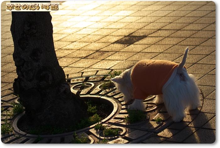 daizukanIMG_6457.jpg
