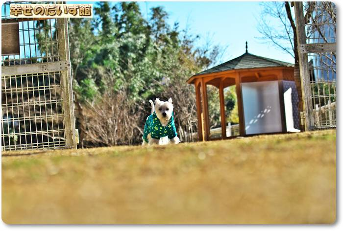 daizukanIMG_65491.jpg