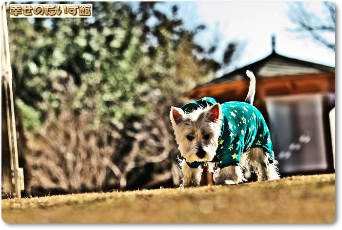daizukanIMG_6554.jpg