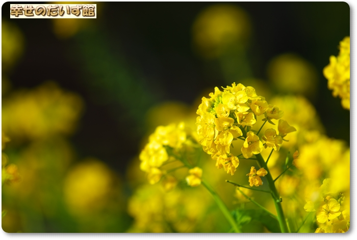 daizukanIMG_7339.jpg