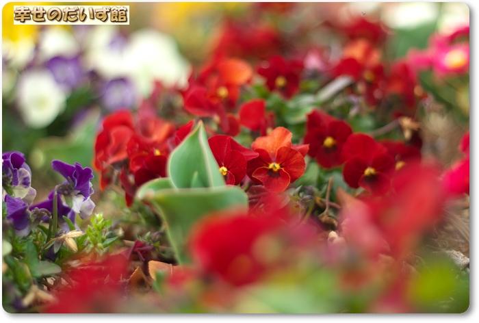 daizukanIMG_7367.jpg