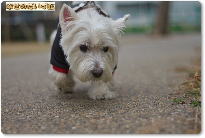 daizukanIMG_7451.jpg