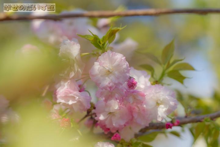 daizukanIMG_9573-1.jpg