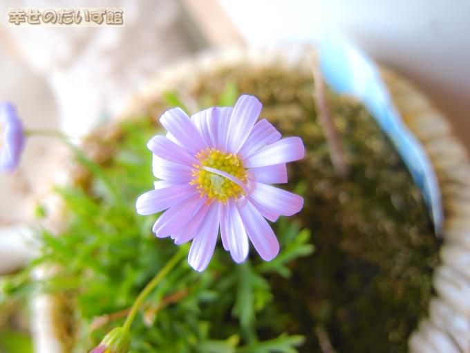 daizukanIMG_9633-1.jpg