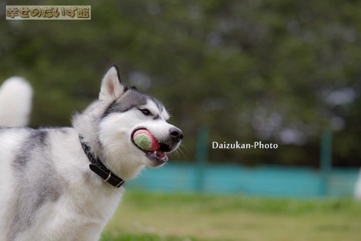 daizukanIMG_9777-1.jpg