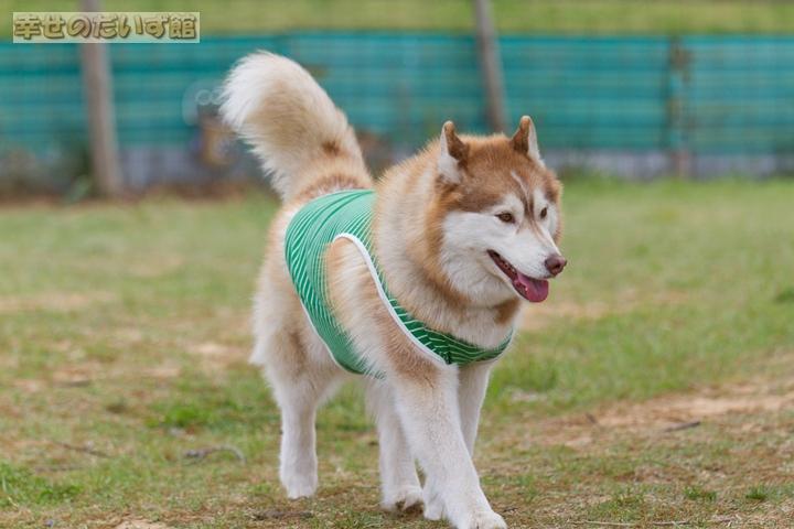 daizukanIMG_9818-1.jpg
