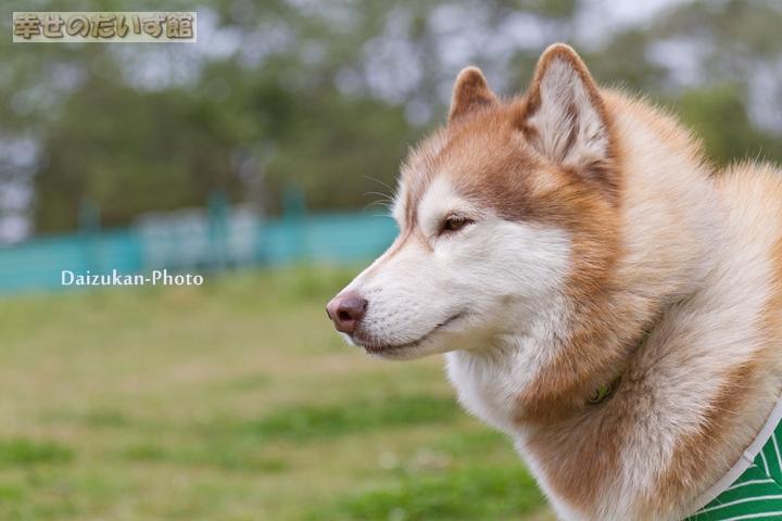 daizukanIMG_9819-1.jpg