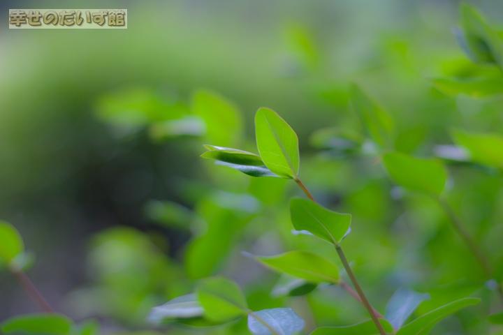 daizukan_MG_0041-1.jpg