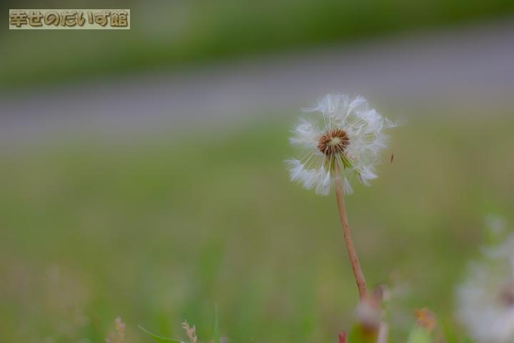 daizukan_MG_0094-1.jpg