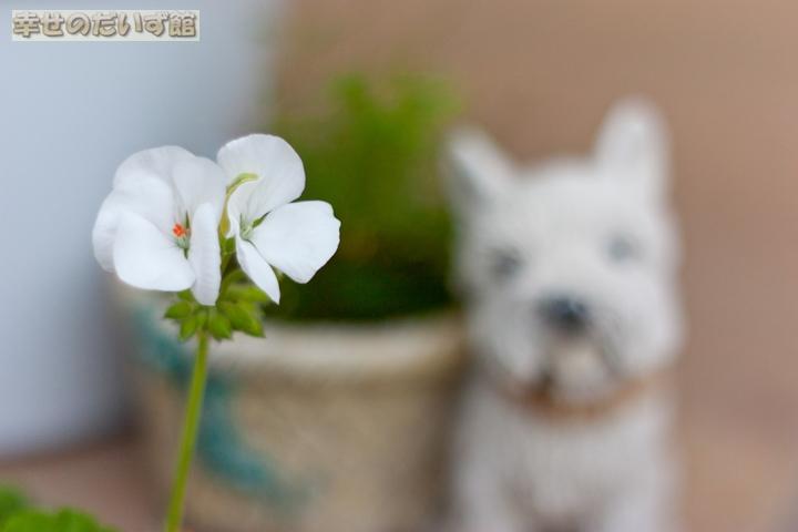 daizukandaizukan-photo-0039.jpg