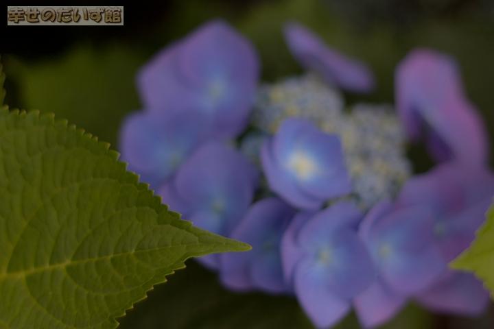 daizukandaizukan-photo-0047.jpg