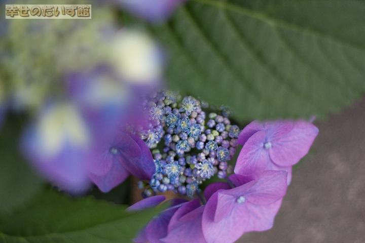 daizukandaizukan-photo-0051.jpg