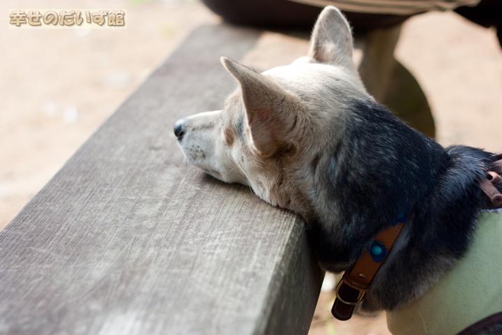 daizukandaizukan-photo-0155.jpg