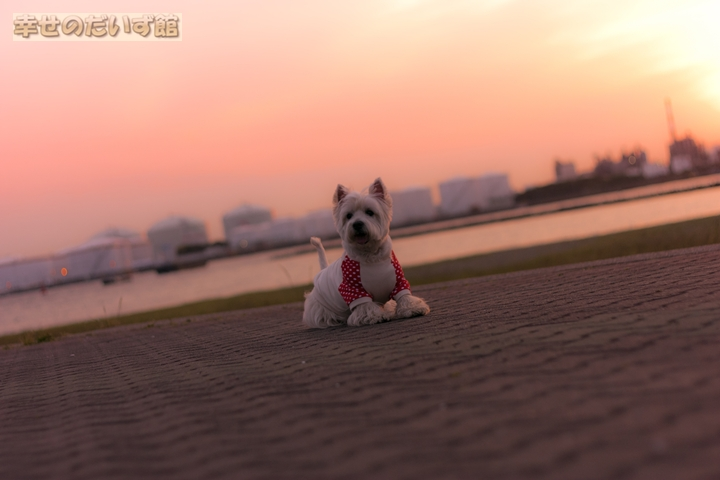 daizukandaizukan-photo-0222.jpg