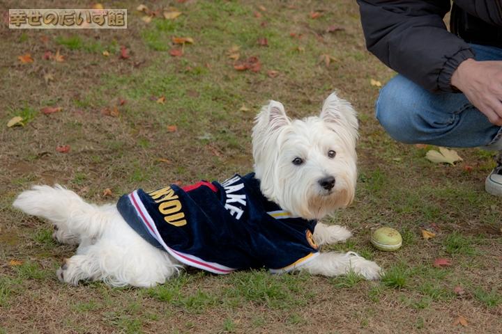 daizukandaizukan-photo-0379.jpg